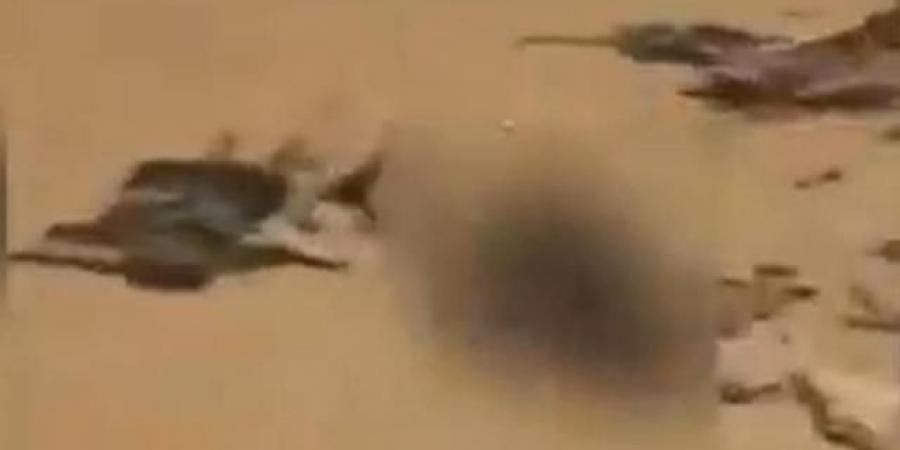 """""""الإخبارية"""" السعودية تعرض مشاهد كارثية كشفت ما يحدث لعناصر الحوثي في مداخل مأرب"""